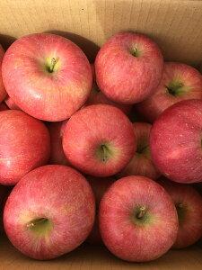 訳あり 山形県産りんご 家庭用(サイズ不揃い) お徳用5 品種お任せ 美味しい ジャムにも良し ジュースもok 送料無料 2860円 訳ありリンゴ わけありりんご 山形リンゴ 林檎 くだもの フルーツ