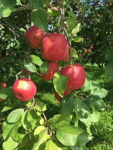 山形県産 ふじりんご りんご約3kg(8玉〜13玉) 贈答用 贈り物 お返し お年賀 お歳暮 果物 フルーツ お届け日時指定OKです。送料無料
