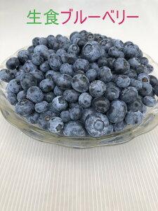 【生食ブルーベリー】甘味と酸味のバランスよし 生食 新鮮ブルーベリー 朝どり 新鮮 国産ブルーベリー ノーザンハイブッシュ系 果物 くだもの 国産フルーツ 土産 お取り寄せ 250g×2 2パック