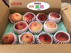 山形の白桃 品種お任せで時期にとれる白桃3600円 6個殻9個 送料無料 もも モモ 桃 果物 くだもの 旬 フルーツ 国産果物 国産フルーツ 新鮮 山形県産 ご当地 お取り寄せフルーツ 美味しい おい