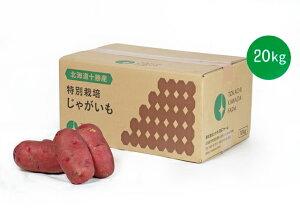 【常温便送料無料】北海道十勝産 希少な越冬じゃがいも レッドムーン 3Lサイズ 20kg【規格外ちょっと訳あり】
