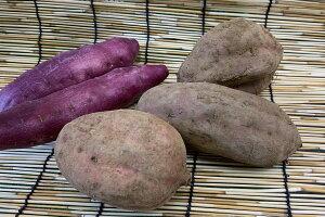 鹿児島県産 安納芋(1kg入り、3-6個)