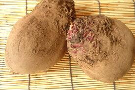 【旬のオススメ】長野県産 ビーツ(Lサイズ・1kg、2〜5個入り)