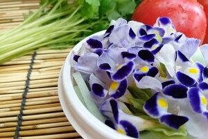 愛知県産 エディブルフラワー(食用花)