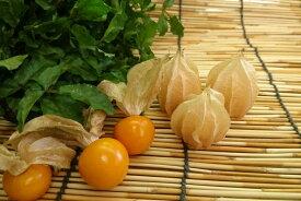 愛知県産他ストロベリートマト 食用ホオズキ1pk