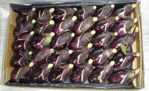 高知県産小茄子(1箱、35個入り)