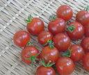 熊本県産 ミニトマト【1pk】