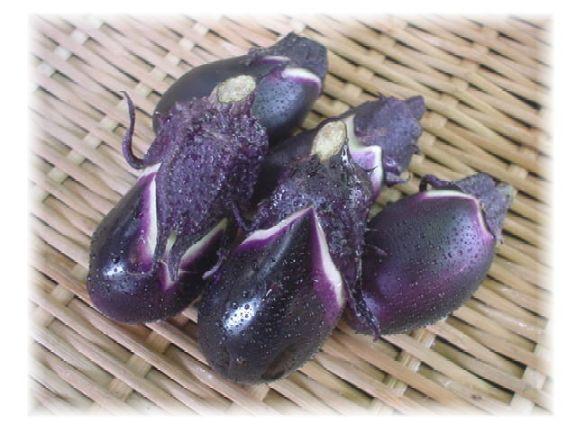 高知県産小茄子(5個)