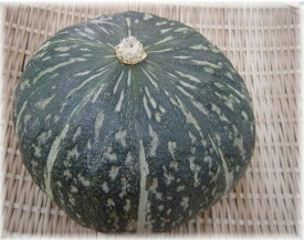 石川県産他 栗かぼちゃ えびす(1個)