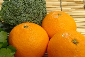和歌山県産清見オレンジ(L1個)