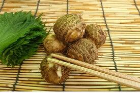 鹿児島県産 石川小芋(2Lサイズ 200g 約5個)