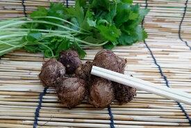 鹿児島県産 石川小芋 (Mサイズ、200g、約10個入)