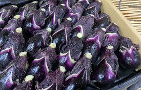 高知県産小茄子(1箱、30-35個入り)