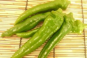 【ブランド京野菜】 京都府産 万願寺とうがらし(100グラム入)