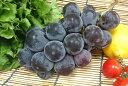 【オススメ】福岡県産 種なしピオーネ葡萄(1房・約500g)