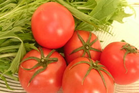 【オススメ】高知県日高村のシュガートマト(約1,5kg、32-40個入)