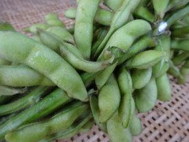 京都産 黒枝豆たんくろう京都が生んだ夏の逸品です!(5束、枝付、約2.5kg)