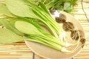 愛知県産 うぐいす菜(1束)