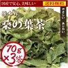 桑樹葉子茶鈣和富含礦物質的飲食茶美容及健康維護。☆ 營養安全、 安全、 充足的美味桑葉茶