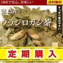 【定期購入】ウラジロガシ茶 60g×2 徳島県産100%で安心・安全美味しいウラジロガシ茶【国産】【無添加・無着色】【送料無料】【RCP】