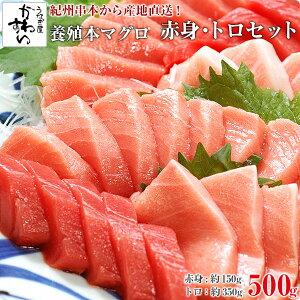 紀州串本産 養殖本マグロのトロ・赤身セット500g 鮪 さく まぐろ 本鮪 黒マグロ サク 寿司ネタ 刺身[MP]