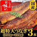 超特大うなぎ蒲焼き 200g-229g×3本セット【ウナギ 鰻 国産 贈り物】