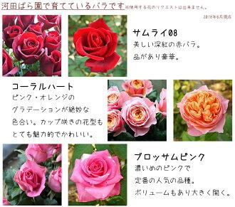 河田ばら園で育てているバラです01誕生日花母女性男性ギフト父誕生日プレゼント退職祝い結婚記念日
