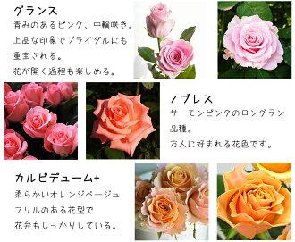 河田ばら園で育てているバラです02誕生日花母女性男性ギフト父誕生日プレゼント退職祝い結婚記念日