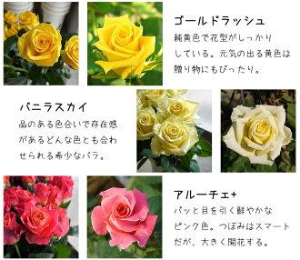 河田ばら園で育てているバラです03誕生日花母女性男性ギフト父誕生日プレゼント退職祝い結婚記念日