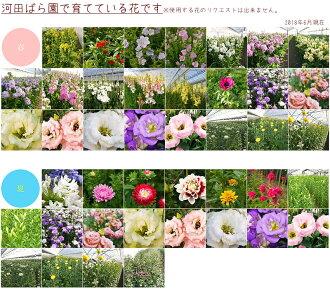 河田ばら園で育てている花です01誕生日花母女性男性ギフト父誕生日プレゼント退職祝い結婚記念日