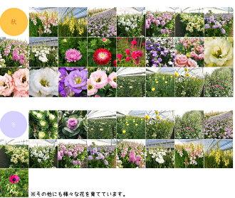 河田ばら園で育てている花です02誕生日花母女性男性ギフト父誕生日プレゼント退職祝い結婚記念日