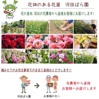 河田ばら園摘みたての花を鮮度そのままに直接お届けします誕生日花母女性男性ギフト父誕生日プレゼント退職祝い結婚記念日