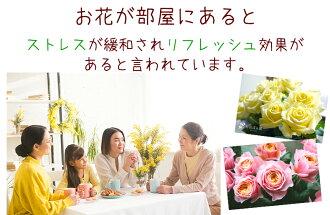 河田ばら園ストレス緩和誕生日花母女性男性ギフト父誕生日プレゼント退職祝い結婚記念日