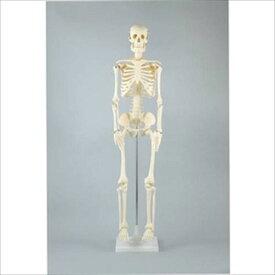 人体骨格模型 85cmアーテック 実験キット 自由研究 /生物/夏休み/小学生/自然観察