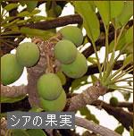 【keinz】【送料無料】ケインズ良質新鮮生シアバターオーガニック認定90g完全無添加未精製天然100%日本製
