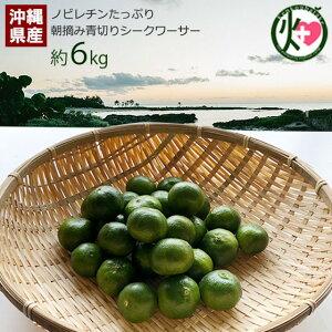朝摘み青切りシークヮーサー 6kg(約240個〜330個) 沖縄 人気 シークワーサー 果実 ノビレチン 南国フルーツ 送料無料
