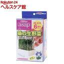 キャティーマン アサップ(asap) 猫の生野菜 6回分(1 箱)【more30】【アサップ(asap)】