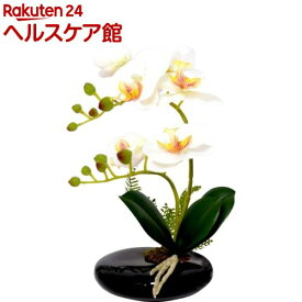 卓上型胡蝶蘭 奏(かなで) ホワイト(1コ入)【永光】