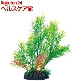 癒し水景 広がるロタラ(1個)【癒し水景】