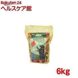 ロータス アダルト ラムレシピ 中粒(6kg)【ロータス】[ドッグフード]
