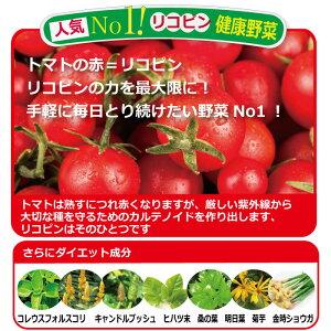 リコピンたっぷりのトマト、フォルスコリダイエット!トマトダイエット