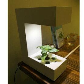 (クーポンつき)灯菜【Akarina14/LED水耕栽培 キット】アカリナ14オリンピア照明サラダ菜種子セット付属LED照明の調光機能とタイマー機能付屋内野菜栽培キット