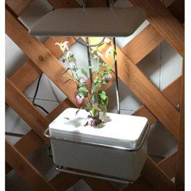 (クーポンつき)灯菜【Akarina15 LED水耕栽培 キット】アカリナ15あかりな室内で野菜栽培オシャレ インテリア簡単 ハーブ栽培
