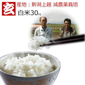 減農薬 白米 30kg 送料無料 特別栽培認証 新潟産 2等米 みずほの輝き 農薬5割減 産年:令和元年 生産者:辻勉氏