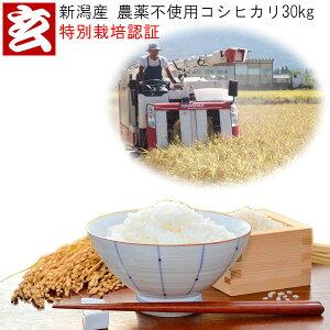 新米 30kg 送料無料 無農薬 玄米 新潟産 無農薬栽培コシヒカリ 生産者:辻勉 (農薬不使用)