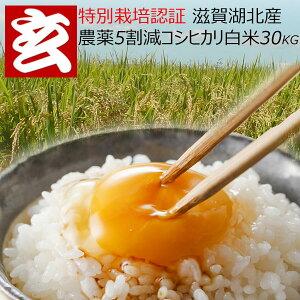 新発売! 農薬5割減 滋賀県湖北産限定 コシヒカリ 白米 30kg 送料無料生産者代表:八若和美氏 産年:令和2年産