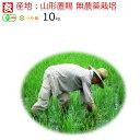 無農薬 玄米 10kg 送料無料 JAS有機認証 1等米 無農薬つや姫 山形県産 置賜地区限定産年:令和元年 生産者:小林 亮