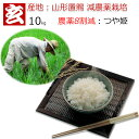 玄米 10kg 送料無料 農薬8割減 減農薬 1等米 つや姫 特別栽培認証 産年:令和元年 産地:山形県置賜産 生産者:小林 …