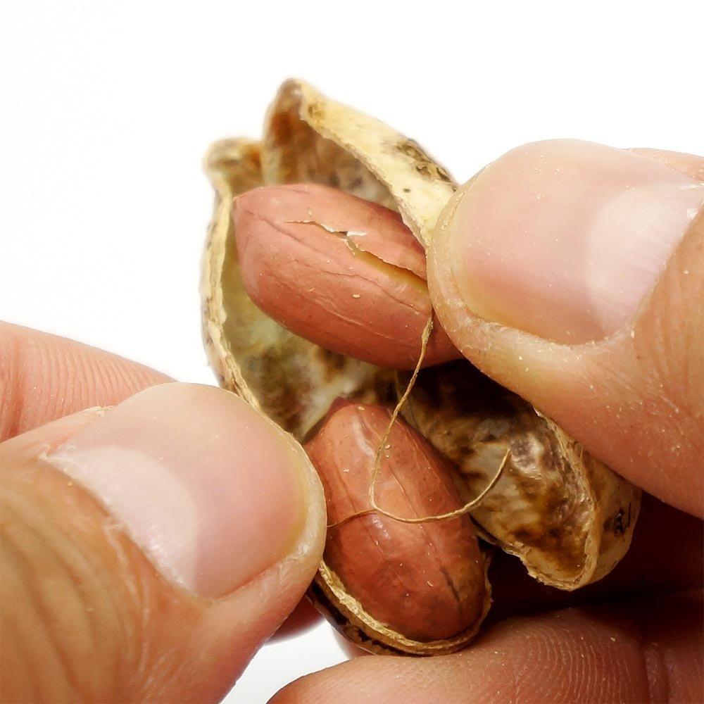 千葉県産ピーナッツ お得用 500g うす皮付き 無塩 ピーナッツ 送料無料