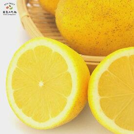 訳あり 国産 レモン 3kg れもん 愛媛県産 減農薬 栽培